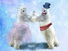 ... IMÁGENES: Fotografías, imágenes y dibujos de osos polares (+5000