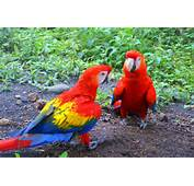 Beautifulredbluegreen And Yellow 2 Parrotparrot Is Sitting Parrot