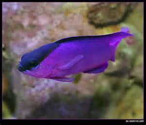 ve looked for colorful freshwater fish, but found nothing so vibrant