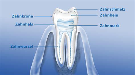 Beschriftung Zahn aufbau der z 228 hne