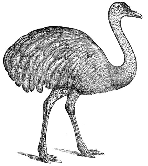 emu mask template printable free coloring pages of emu mask