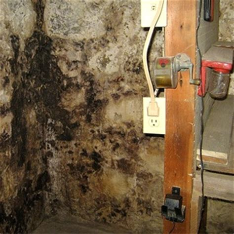 how to get mold smell out of basement home