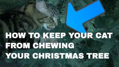 how to keep cats tree how to keep your cat from chewing your tree