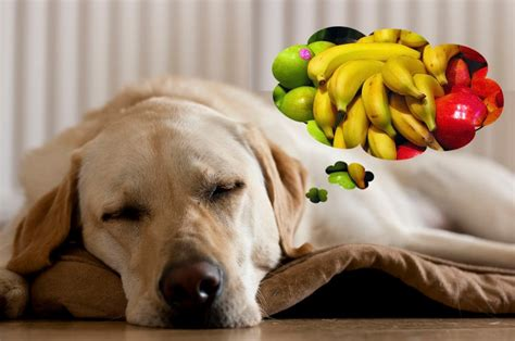 can dogs eat coconut can dogs eat fruit like oranges watermelon cherries pears papaya and lemons