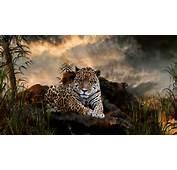 Big Cats  Wild Animals Wallpaper 34365415 Fanpop