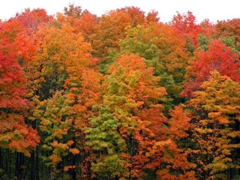 fall colors 2017 when michigan s fall colors will peak in 2017 wzzm13 com