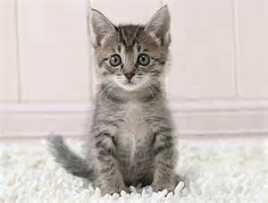 <strong>kitten</strong>.jpg