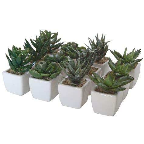 cactus in white ceramic pot artificial plant box of 12