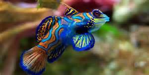 Colorful Freshwater Fish For Aquariums » Home Design 2017