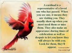 Cardinals loved ones and birds on pinterest