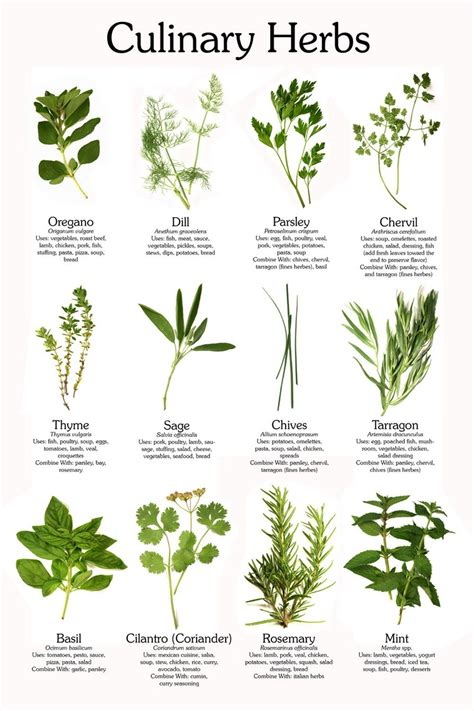 free printable herb poster culinary herb poster herbs gardens and plants