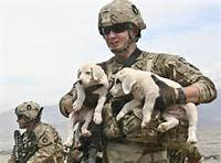 Military Puppies Of The Week In Afghanistan  Off Base