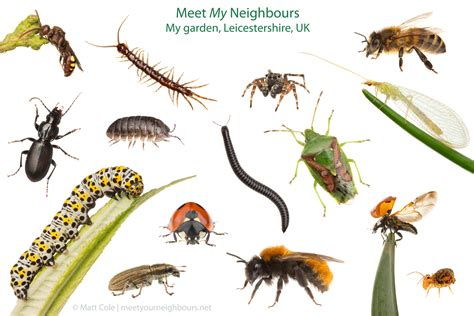types of garden pests matt cole macro photography december 2012