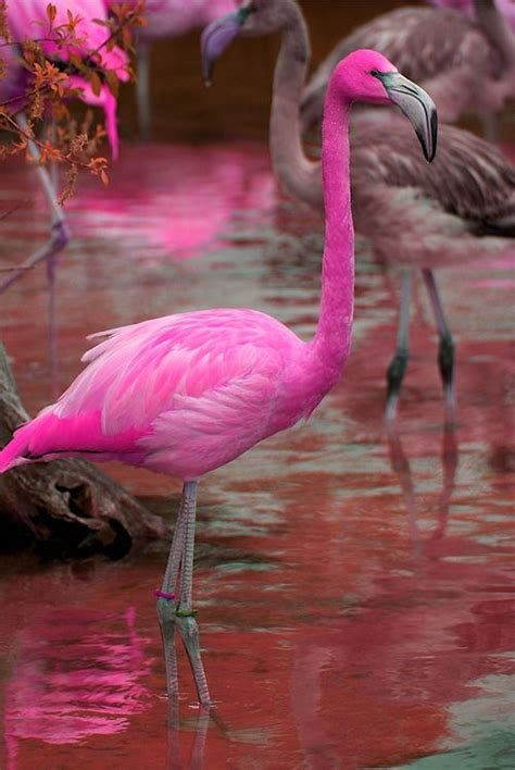 pink flamingos 25 best ideas about pink flamingos on pinterest