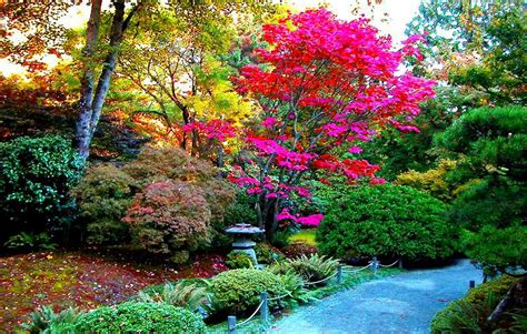 imagenes de paisajes lindos para bajar fondo escritorio bonito parque