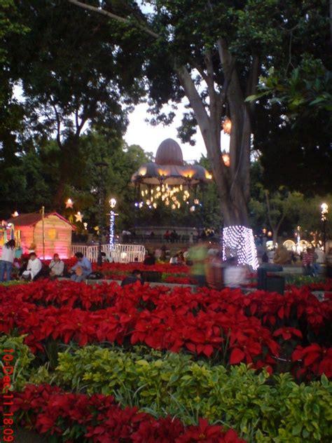 nochebuenas en el zocalo de oaxaca dia 101 dic 10 2011 - Zocalo Noche Buenas