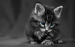 Cute Black Cat Desktop
