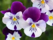 Google Images Beautiful Flowers