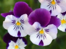 Google Images Beautiful Flowers