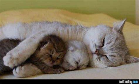 katze zuckt beim schlafen ok katzen sind flexibel aber kann so schlafen gem 252 tlich