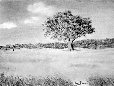 Landscape Drawing Giclee Prints Western Equine Pets And Landscape Drawings