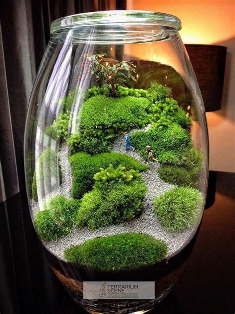 moss terrarium supplies blablapartner com