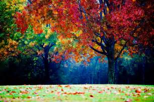 colorful trees 50 beautiful landscape photography pictures