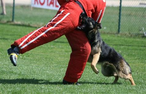 sports canins concours canins ring s 233 lectifs 2010