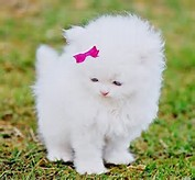 Cute White Kittens with Bows