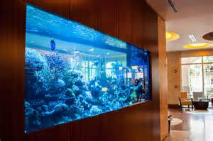 What a Fish Tank Will Add to Your Home   overly real