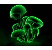 WnP Wallpapers &amp Pictures Green Mushroom Wallpaper