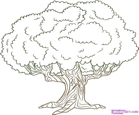simple drawing tree how to draw an oak tree my best friends wedding