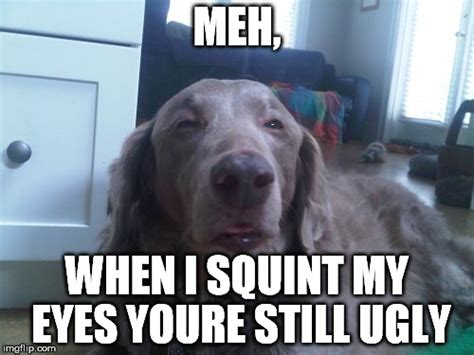 Ugly Dog Meme - high dog meme imgflip