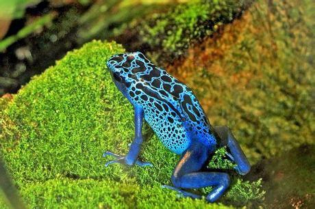 various tropical rainforest animals paperblog
