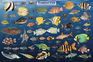 Tropical fish   All information about the animals.