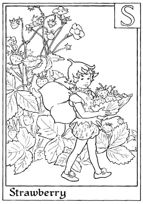 fairies in bloom a flower coloring book books 17 best images about activity books on