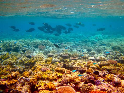 the the great barrier reef of australia its products and potentialities containing an account with copious coloured and photographic illustrations and coral reefs pearl and pearl shell bãªch books great barrier reef australia