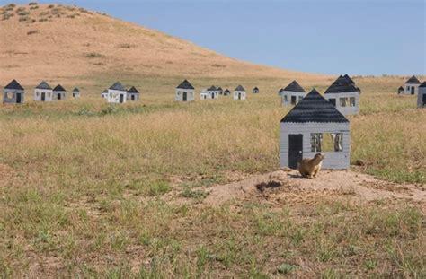 Prairie Dog Houses Design For Mankind