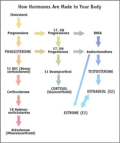 estrogen hormone effect on men natural spinal care chiropractor in dublin ca usa