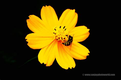 black wallpaper with yellow flowers hd beautiful flowers wallpapers studiopk