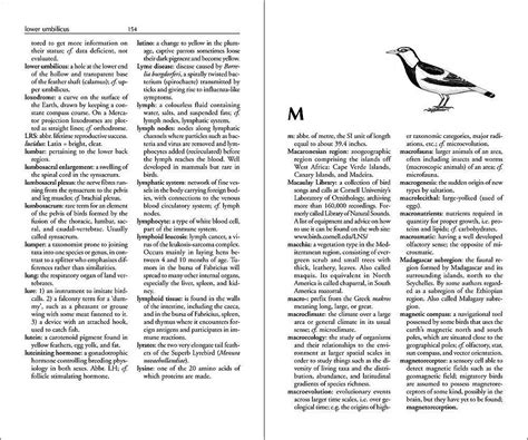 layout definition dictionary the ornithologist s dictionary lynx edicions