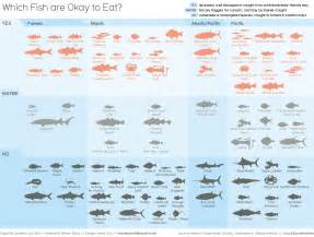 which fish or mollusks or cephalopods are okay to eat