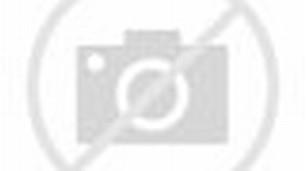 gambar kelinci kartun berwarna gambar kelinci makan rumput gambar ...
