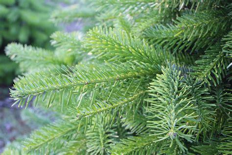 weihnachtsbaum mit ballen kaufen top 28 weihnachtsbaum mit ballen 28 images top 28 weihnachtsbaum led beleuchtung