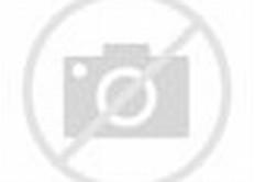Desktop Wallpaper Coral Reef Fishes