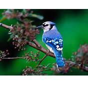 15 Amazing &amp Beautiful Bird Photos