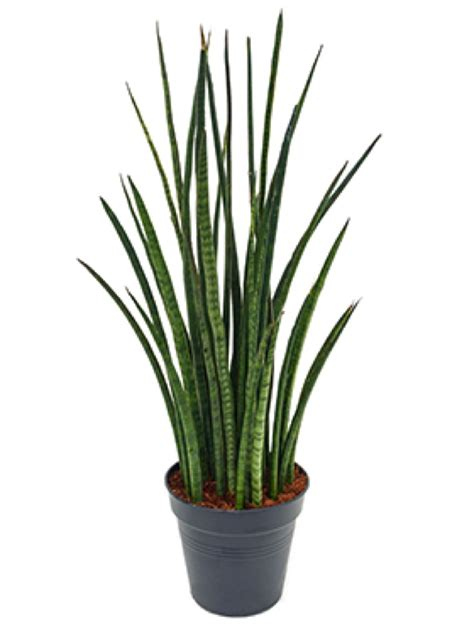 gartenshop bestellen agaven bestellen terrapalme heim und gartenshop