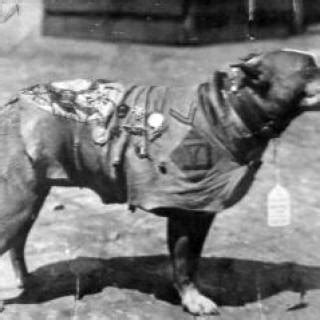 Sgt Stubby War Sergeant Stubby S Profile