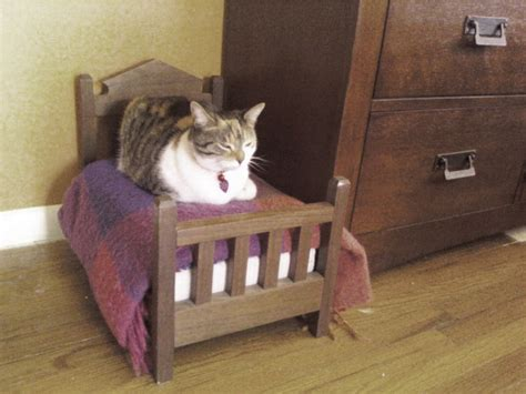 Why Does Cat On Bed by 19 Cats Who Understand Doll Beds Were Invented Just For Them