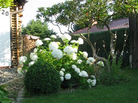 Mediterrane Pflanzen Balkon 2230 by Vorgarten Mit Hydrangea Annabell Hortensie 1 Hortensien
